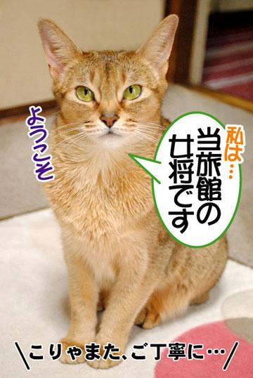 20110304_01.jpg