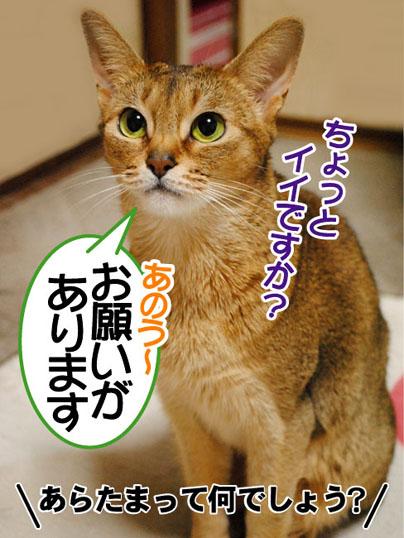 20110308_01.jpg