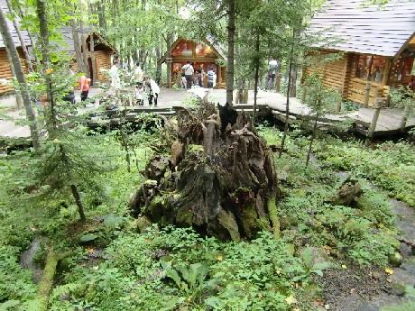 ニングルの住む森
