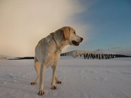 今日の最高気温は、氷点下2.5℃なり~。