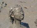 Mud Girl 3