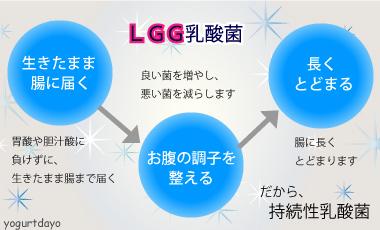LGG乳酸菌は持続性乳酸菌