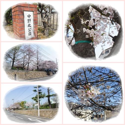 sakurapage1.jpg
