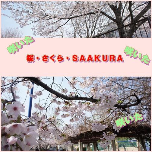sakurapage3a.jpg