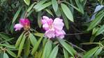 2011_0526_144338-DVC00011.jpg