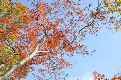 20131116 somugiyama 015