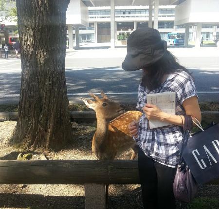 ブログ鹿と一緒に