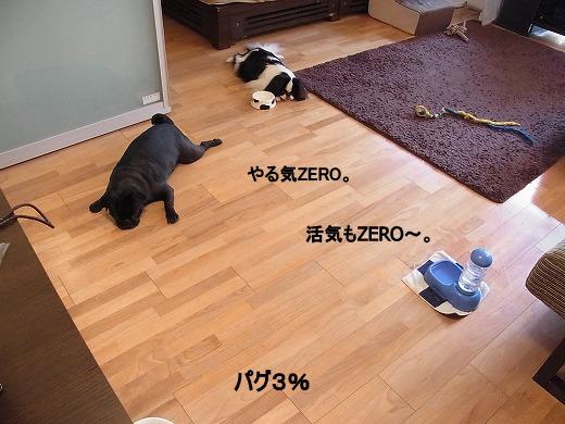 RIMG0232.jpg