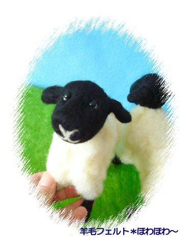 羊・サフォーク種