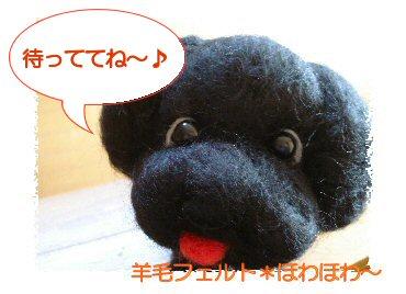 黒トイプーちゃん
