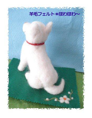 北海道犬3