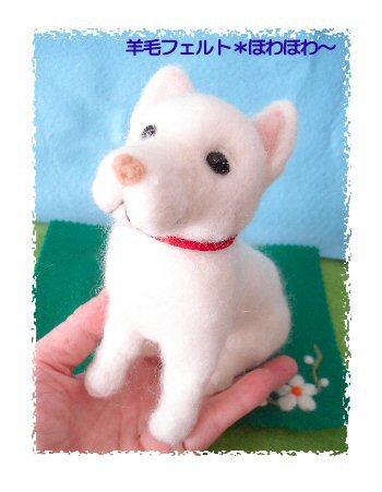 北海道犬4