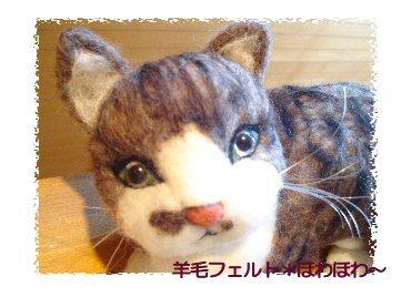 ネコちゃんお顔