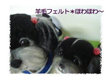 シーズーちゃん4