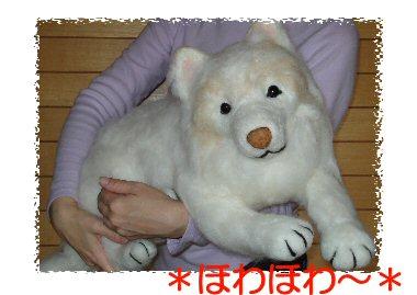 サモエドちゃんダッコ