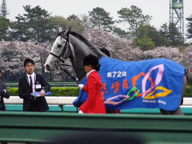 第72回 皐月賞06