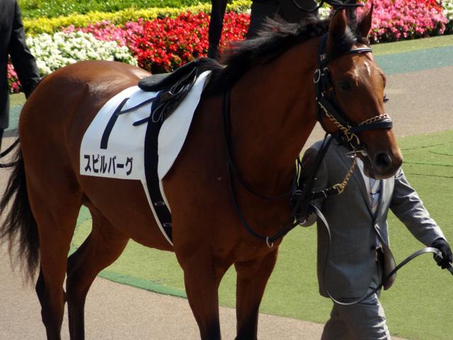 2012日本ダービー16
