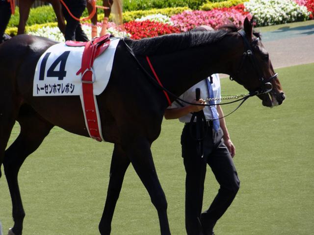 2012日本ダービー22