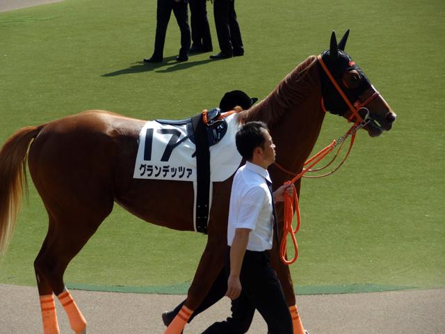 2012日本ダービー23