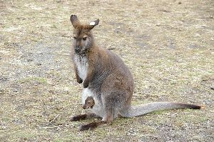 kangoul.jpg