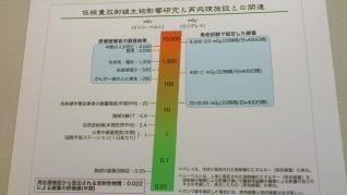 DSC_0537_convert_20110613105418.jpg