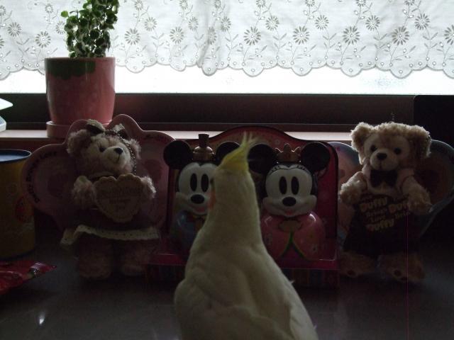 060_convert_20110303201320.jpg