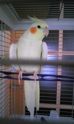 鳥獣ぴるゴン
