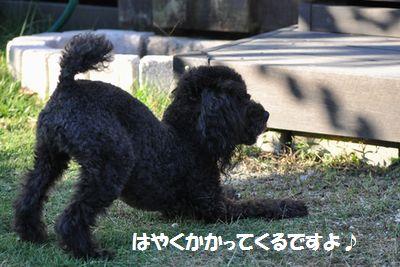 DSC_0044_20121031111012.jpg