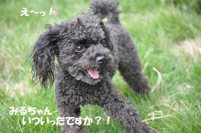 DSC_0081_20120930151641.jpg