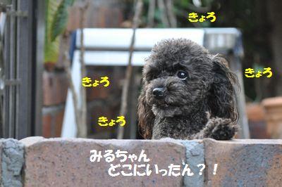 DSC_0153_20121031111044.jpg