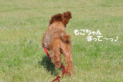 DSC_0239_20120428122715.jpg