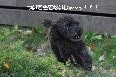 DSC_0251_20121031111123.jpg