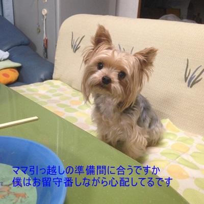 20141008yota_201410112029322e0.jpg