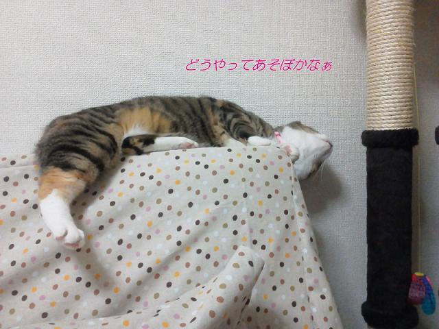 NEC_0873.jpg