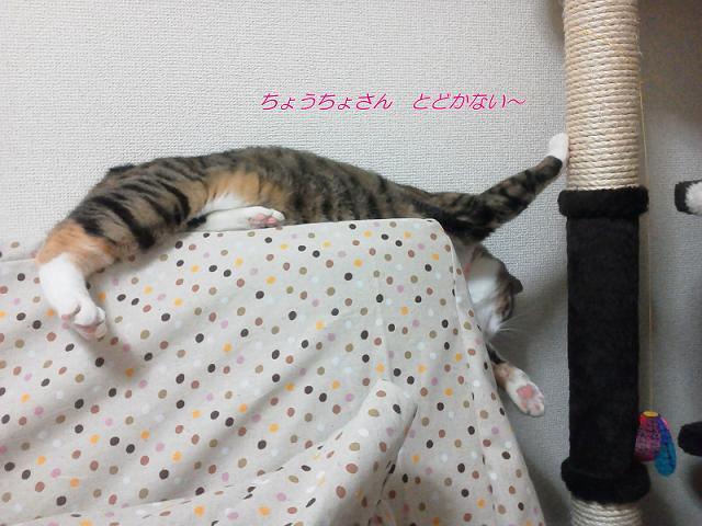 NEC_0874.jpg