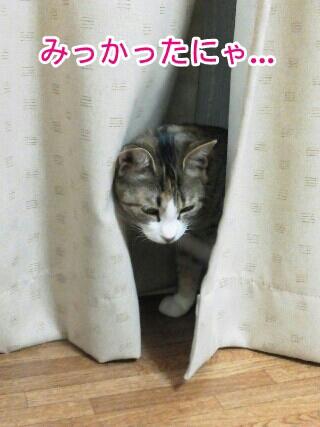 fc2blog_20120521230310631.jpg