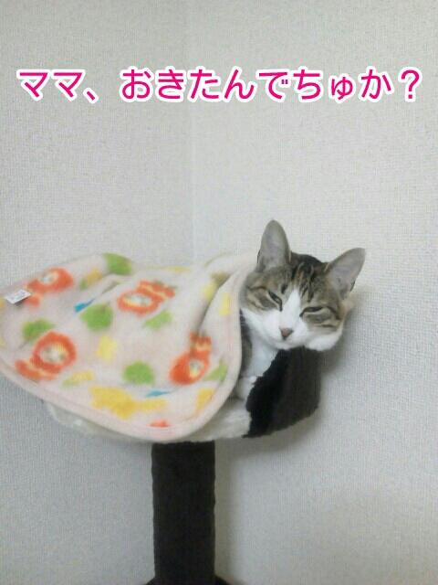 fc2blog_20120522205607cbc.jpg