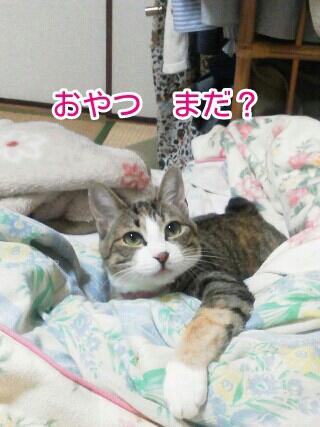 fc2blog_20120525065109d7b.jpg