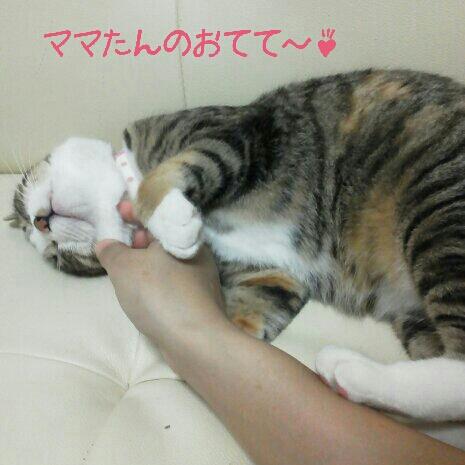 fc2blog_20120707214916e1c.jpg