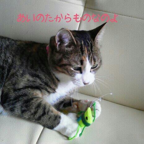 fc2blog_201207220027272b1.jpg