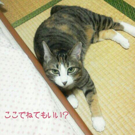 fc2blog_2012090617371370b.jpg