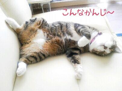 fc2blog_20120911042723f4c.jpg