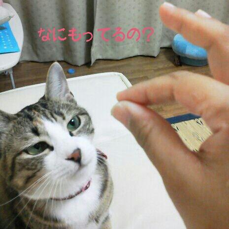 fc2blog_20120911213445404.jpg