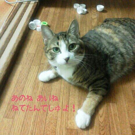 fc2blog_20120914001145e47.jpg