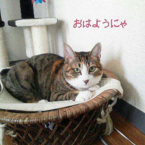 fc2blog_20120914074346c77.jpg
