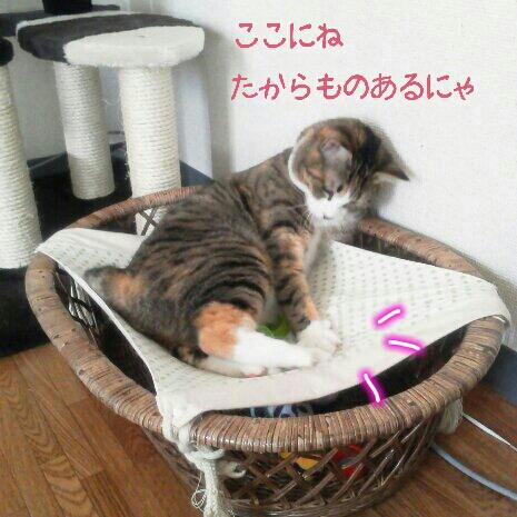 fc2blog_20120914074718750.jpg