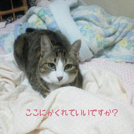 fc2blog_201209190046280e2.jpg