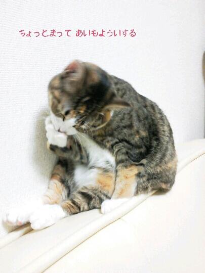 fc2blog_201209262353086cc.jpg