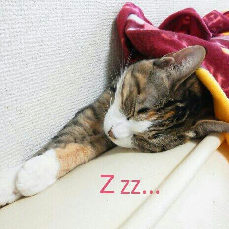 fc2blog_2012110323182528e.jpeg