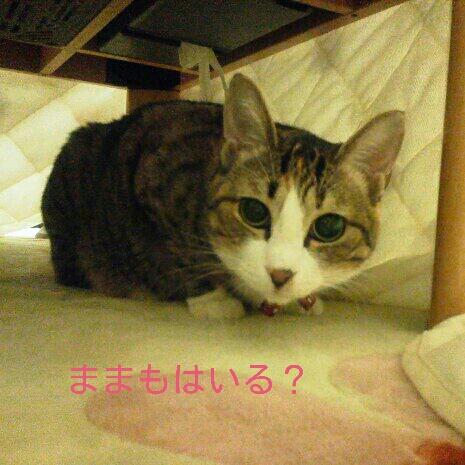 fc2blog_20121104170158761.jpeg